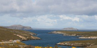 See the Falkland Islands with Lindblad Expeditions