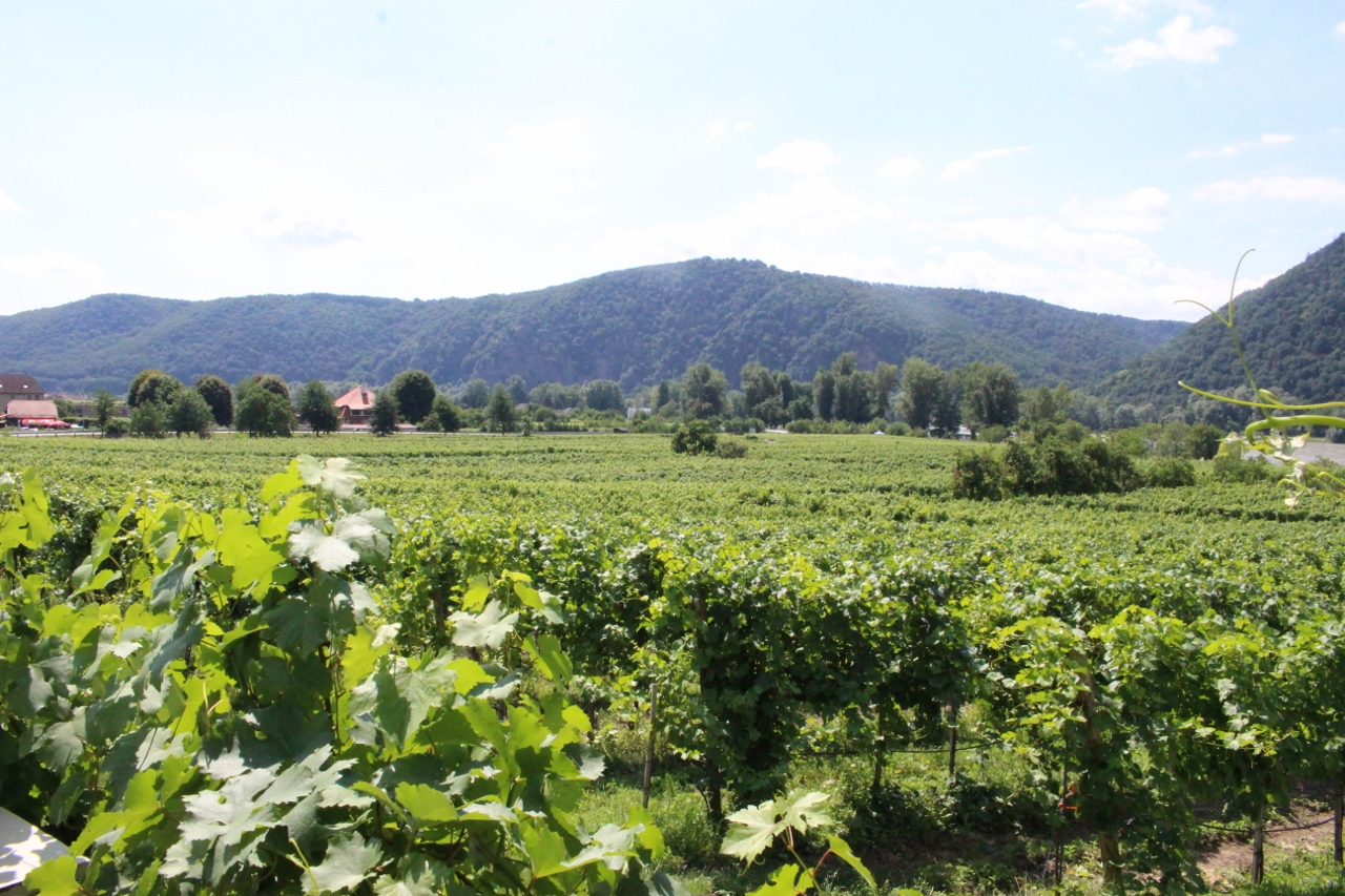 Wine making is a major industry in Durnstein, with white wines a particular speciality of the region.