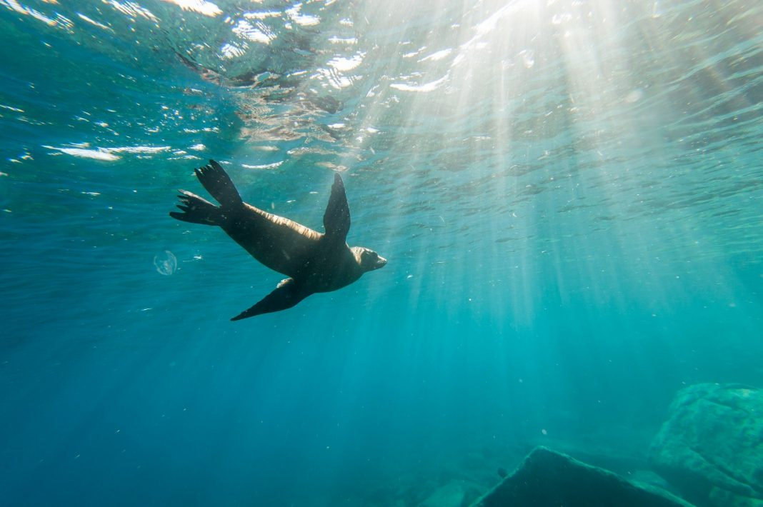 BBC Earth documentaries will become more interactive on Holland America Line